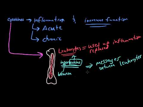 #26 - The chemicals of inflammation - PAF, Cytokines, Tumor Necrosis Factor, Interleukin-1