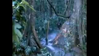 Paint it black ( A Vietnam war song)