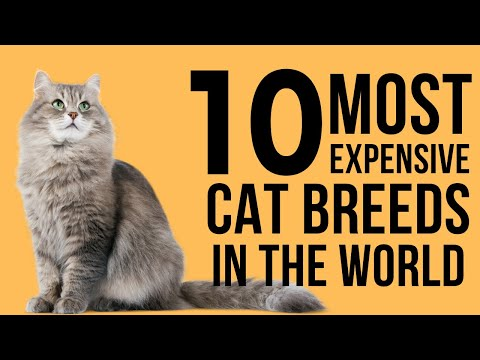 Top 10 Most Expensive Cat Breeds In The World | Rare Exotic Cat Species