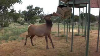 elk at wildlife west nature park