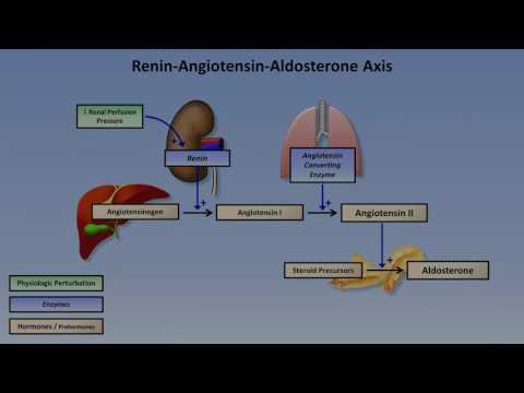 Sodium and Potassium Metabolism Renin, Angiotensin, Aldosterone, and ADH