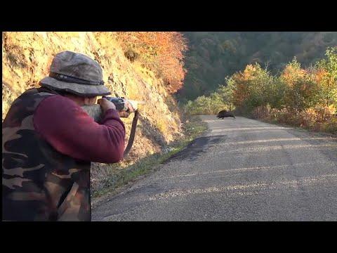 Türkiye'de Yaban Domuzu Avı / Wild Boar Hunting in Turkey
