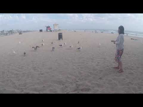 Feeding Birds And Fishing At The Beach