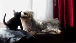 Kitten Vs Maltese, Best Frenemies