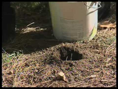 How To Vertical Mulch A Tree Youtube