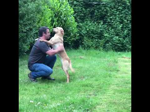 how-to-train-a-puppy-to-trust-and-respect-you-through-physical-handling.-jamie-penrith