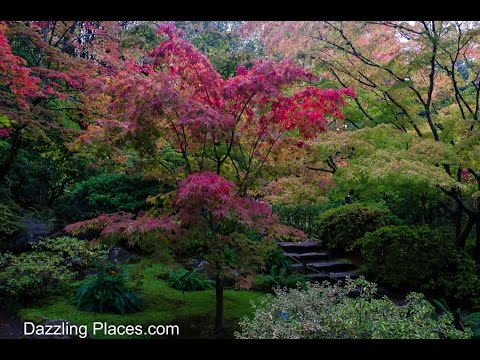 The Splendid Fall Colors at Seattle's Japanese Garden