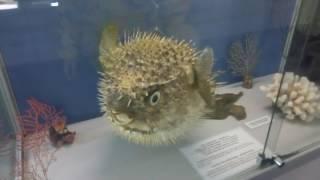 Музей: животные и птицы Беларуси +морские обитатели