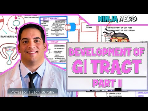 Gastrointestinal | Development & Embryology of the GI Tract | Part 2