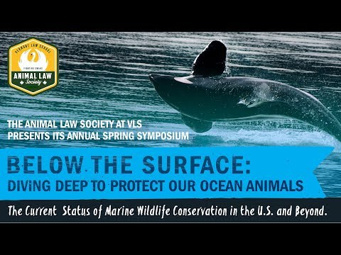 Below the Surface: Diving Deep to Protect our Ocean Animals