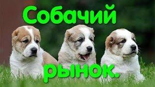Собачий рынок. Староконный рынок. Одесса. Продажа собак. Собака. Животные. Птичий рынок. VLOG DOG.