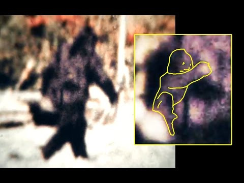 Patterson Bigfoot's Baby (?)