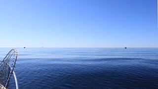 Salmon trolling at Baltic Sea, Team Humina 2015