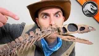 Jurassic World Explorers: The First Dinosaur? | Jurassic World