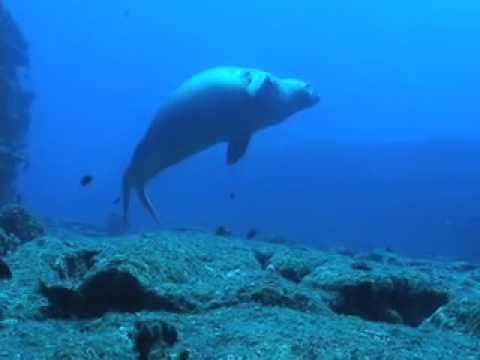 Scuba Diving Niihau