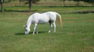 Nova legija - konje bele bom zapregel