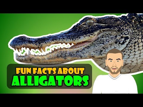 We have our Top 5 Alligator Facts for Kids! (Educational video for students)