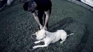 Dogue Argentin Marche Aux Pieds Sans Laisse / Formation Educateur Canin