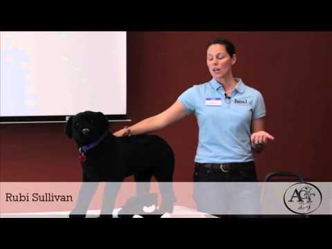 Basics of Massage for Your Dog HD