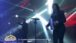 Nery Pedraza  Cumbia del Pájaro Cenzontle