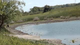 Браконьерство в Чернигове.(В Чернигове браконьерство в порядке вещей., 2015-05-23T17:31:14.000Z)