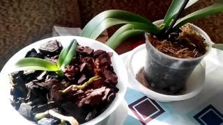Омоложение, Размножение  Орхидеи путем Деления куста(Как омолодить орхидею фаленопсис. Размножение орхидеи Группа в Контакте https://vk.com/club111853917 Самые различные..., 2015-10-16T13:34:22.000Z)