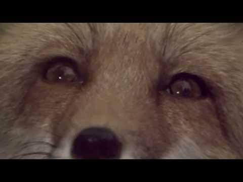"""SALLY STEVENS - THAT NIGHT (Theme from """"The Fox"""")"""