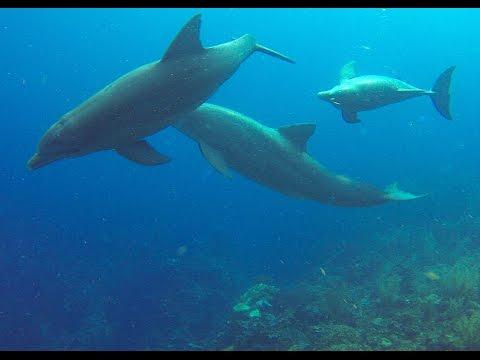 SAN PEDRO, BELIZE diving - December, 2015; dolphins!, sharks; Hol Chan Marine Park; Ambergris Caye