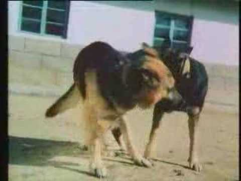 Dogs mating from YouTube · Duration:  3 minutes 39 seconds