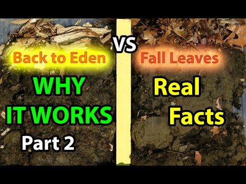 Back to Eden Organic Gardening 101 Method with Wood Chips VS Leaves Composting Garden Soil  #2