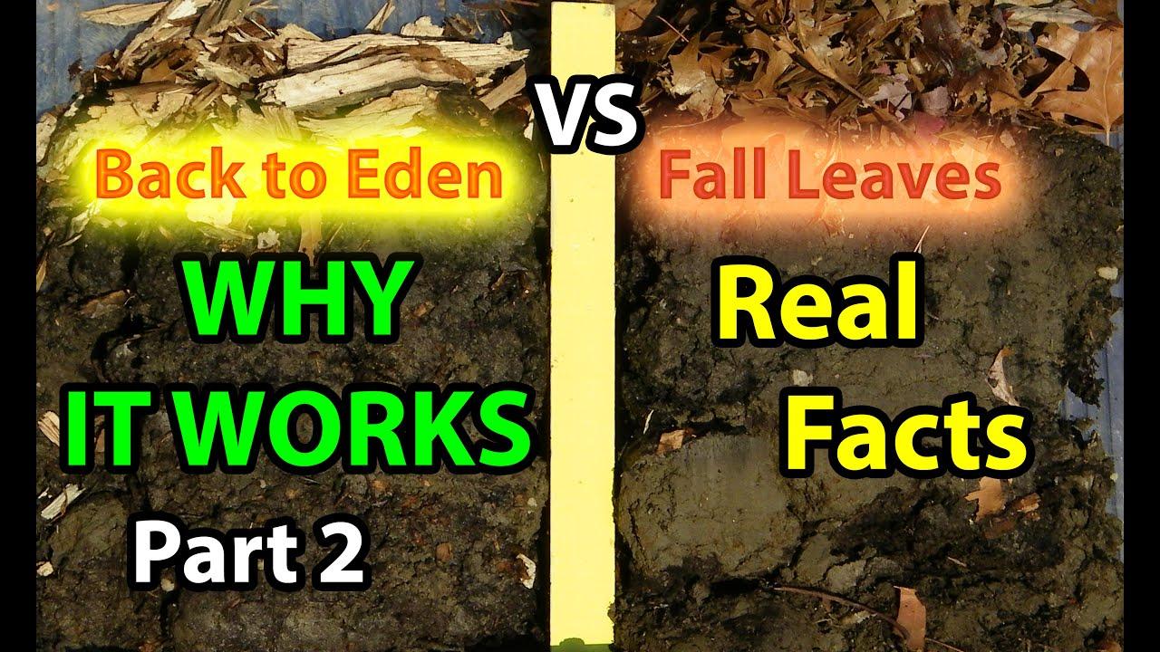 Back To Eden Organic Gardening 101 Method With Wood Chips VS Leaves  Composting Garden Soil #2