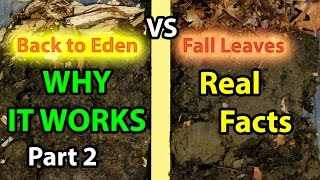 Back to Eden No Till Organic Gardening 101 Method with Mulch VS Leaves Composting Garden Soil  #2