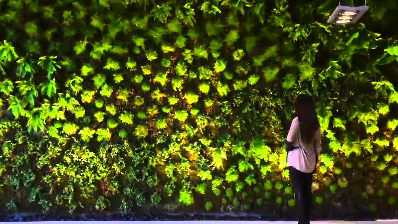 Acer ejecuci n de muro verde youtube for Muros de plantas verticales