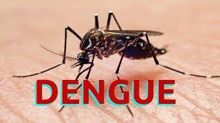 DENGUE Mambo muhimu yakufahamu kuhusu ugonjwa wa Dengue  Dalili  Tiba  Maambukizi