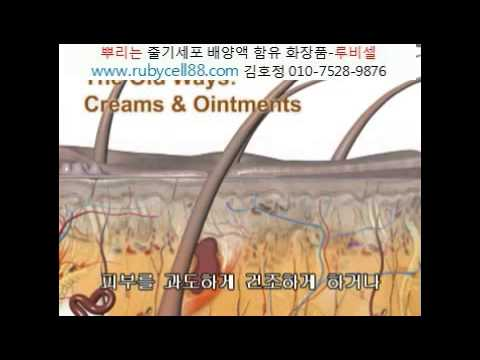 EGF 화장품의 진실.뿌리는줄기세포화장품.김호정 010-7528-9876