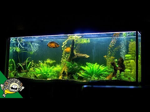 Image result for aquarium