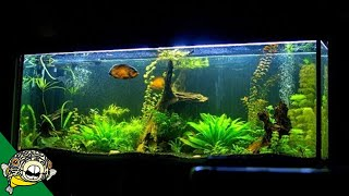 What makes a good aquarium? thumbnail