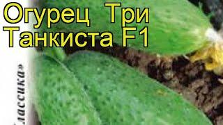 Огурец Три Танкиста F1. Краткий обзор, описание характеристик, где купить семена cucumis sativus
