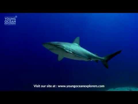 Our new interactive Young Ocean Explorers website