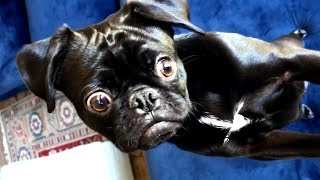 Weekly Cute and Funny Animal Videos! 🐱🐶