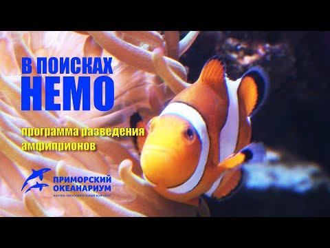 Вопрос: Как разводить рыб клоунов?