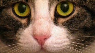 Как легко помыть кота по русски(Сборник советов для тех кто хочет искупать своего кота. Это видео призвано показать, что купание кошек можн..., 2014-12-15T13:06:54.000Z)