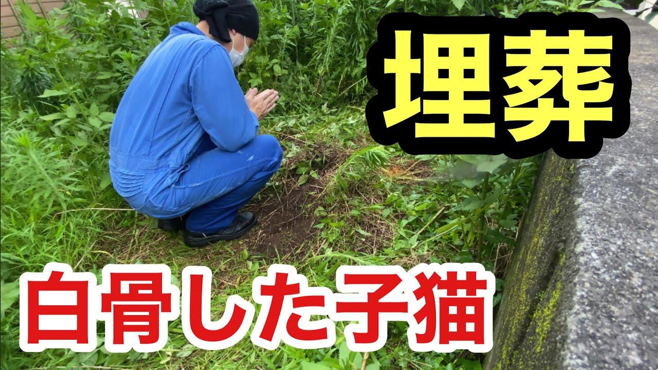 ばぁちゃん家の庭に白骨化して亡くなった子猫がいたので埋葬しました