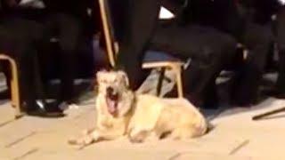 Pes udělal z koncertu klasické hudby zábavu!