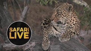 safariLIVE - Sunset Safari - July 22, 2018