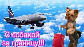 Правила перевозки животных за границу в салоне самолёта//Перелёт с животным за границу