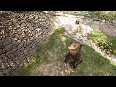 Dolomiti Paganella Parco Faunistico in 360° (VR)