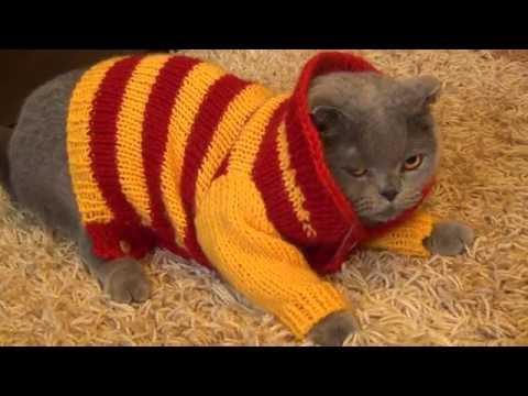 Коты,котики,котята!DIY игрушки для котов СВОИМИ РУКАМИ!