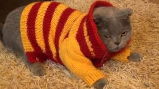 Свитерок для кошки! Маленький проект- эксперимент для маленькой кошки )))
