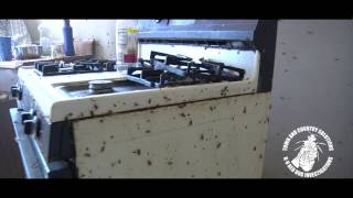 Webisode 2 Home Roach Invasion by Town and Country